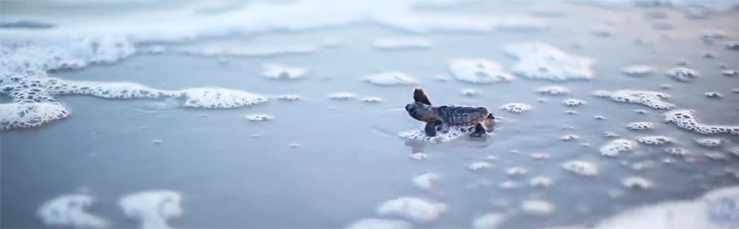 Sea Turtle Rehabilitation